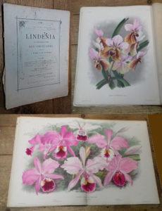 0-lindenia-04